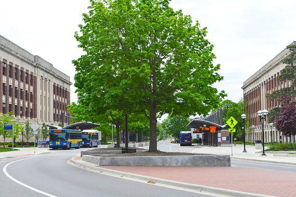 Ann Arbor Photo 41