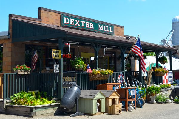 Dexter Photo 7