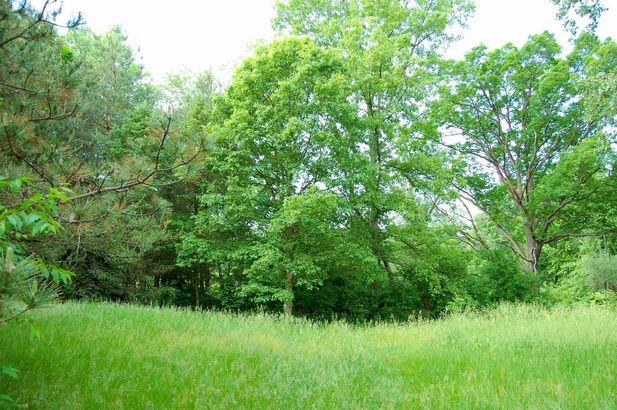 2323 Weber Drive - Photo 8