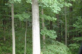 3404 Oak Hollow Ann Arbor, MI 48103 Photo 6