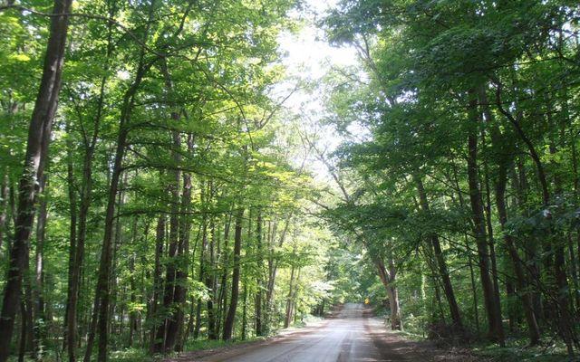 7435 N Ridge Road - photo 1