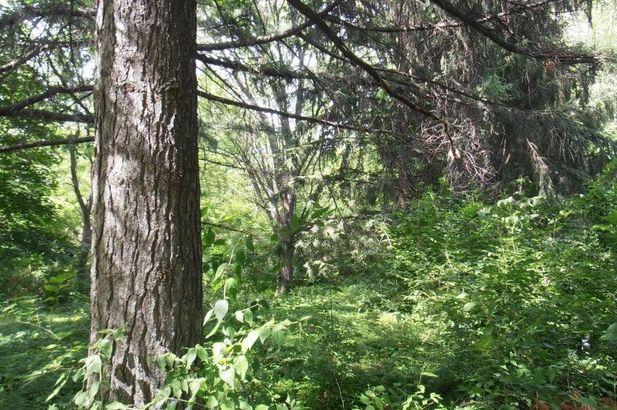 7435 N Ridge Road - Photo 58