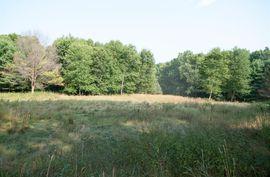 3250 Tanglewood Trail Chelsea, MI 48118 Photo 10
