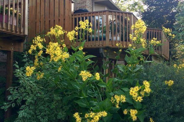 1261 Laurel View Drive - Photo 49