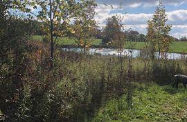 2850 Tessmer Ann Arbor, MI 48103 Photo 11