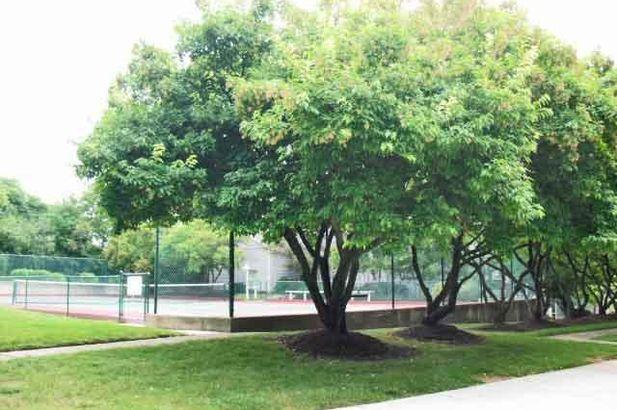 4299 Pine Ridge Court - Photo 23