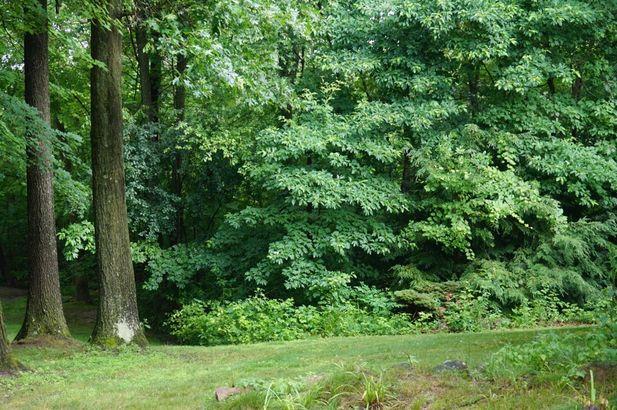 11975 Cody Creek Court - Photo 53