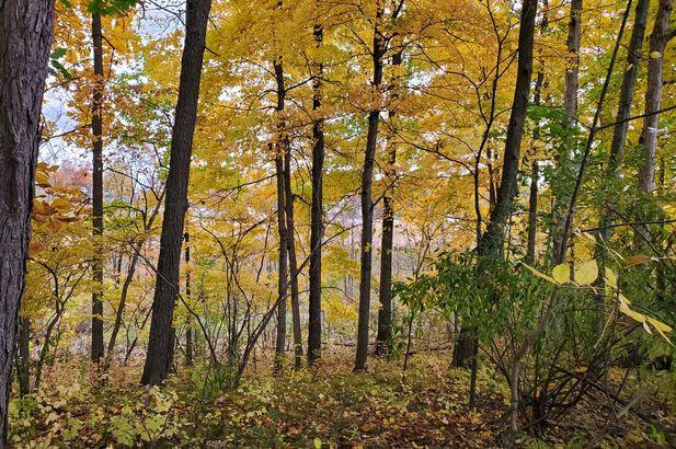 16771 Cavanaugh Lake Road - Photo 2