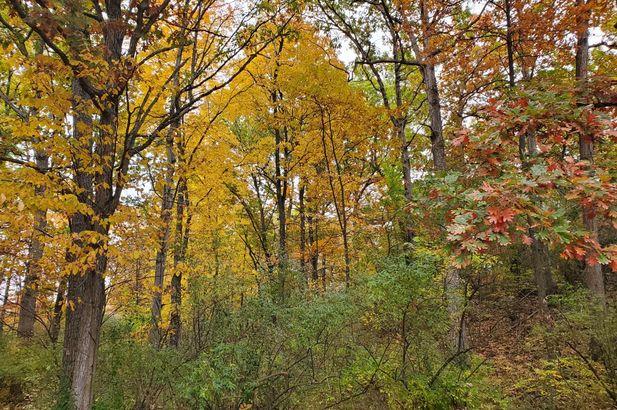 16771 Cavanaugh Lake Road - Photo 19