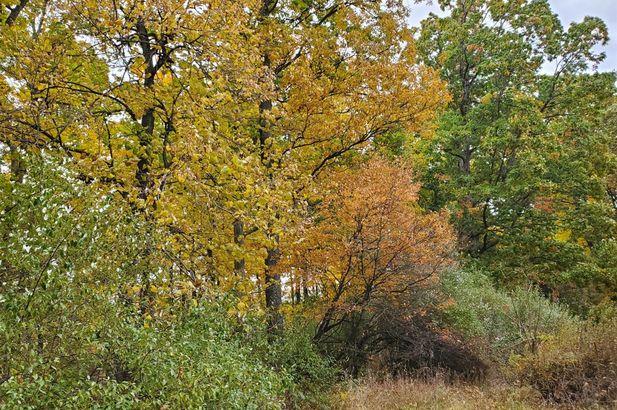16771 Cavanaugh Lake Road - Photo 20