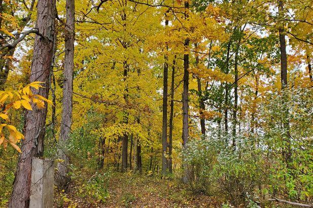 16771 Cavanaugh Lake Road - Photo 21