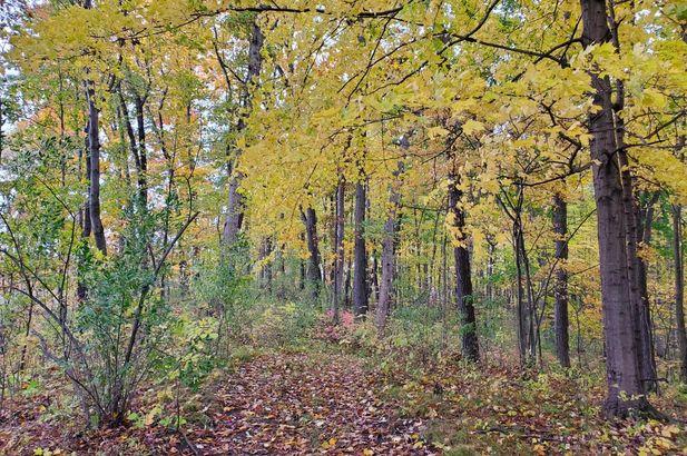 16771 Cavanaugh Lake Road - Photo 6