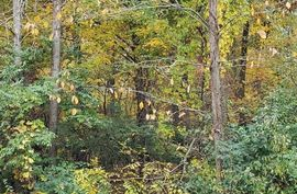 1536 Stonehaven Road Ann Arbor, MI 48104 Photo 4