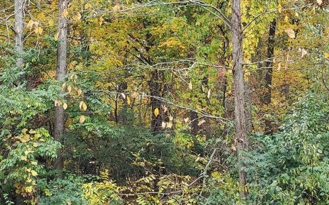 1536 Stonehaven Road Ann Arbor, MI 48104