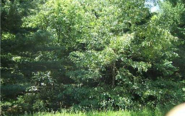 0 Wald Strasse Manchester, MI 48158