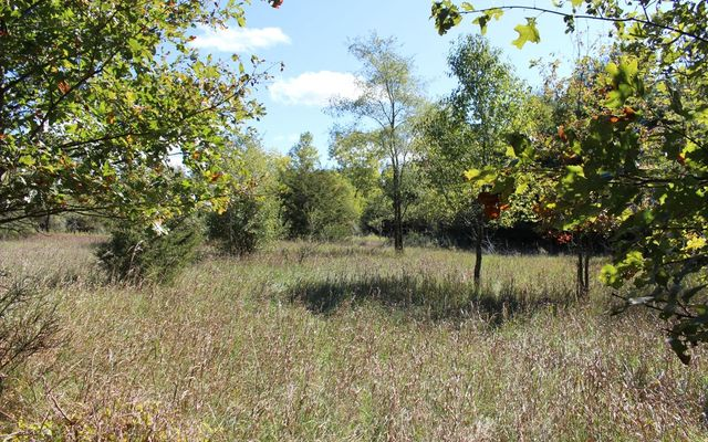 0 Wolf Lake C Road - photo 1