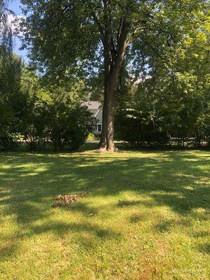 343 Pinewood Street Ann Arbor, MI 48103
