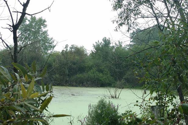 10557 Island Lake Road Dexter MI 48130